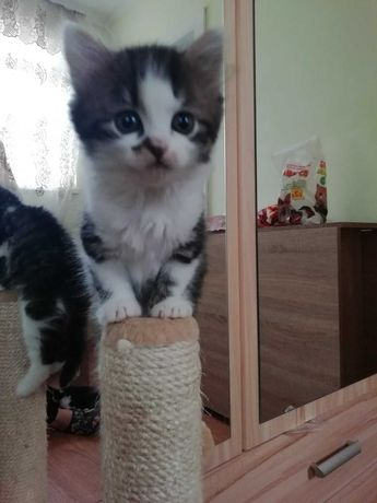 Кошенята шукають домівку