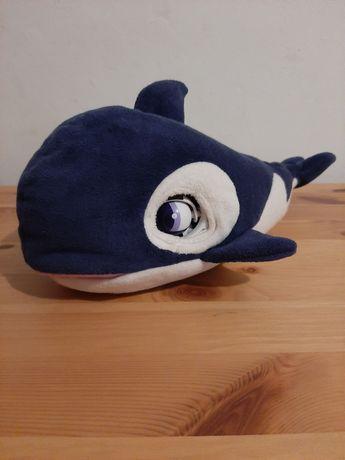 Orka Connie, przyjaciel Blu blu
