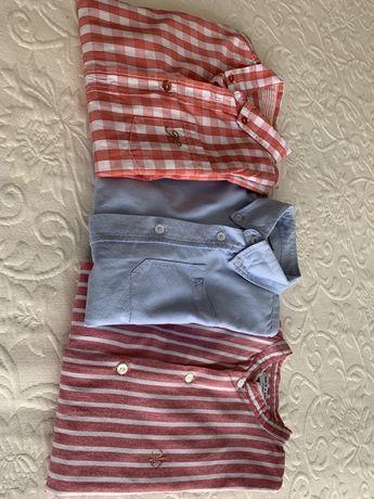 Camisas de crianca