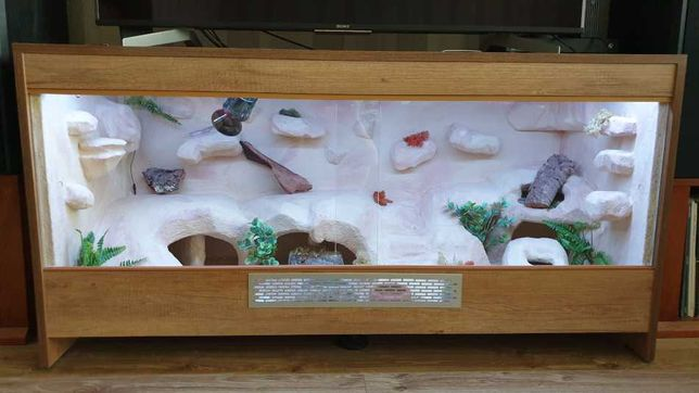 Terrarium wraz z 4 gekonami lamparcimi