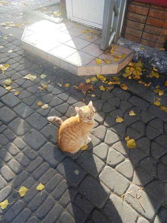 Найден котик!Ждет хозяина!