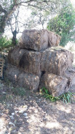 Estrume agricultura biologica / permacultura