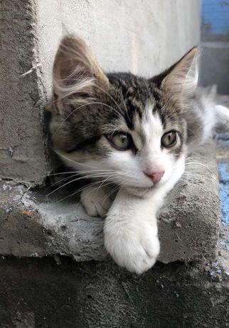 Даром, Котята в добрые руки