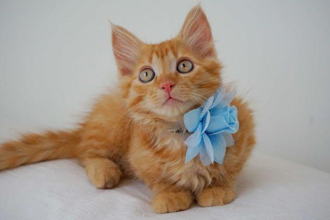 Котенок. Котята. Котик в хорошие руки