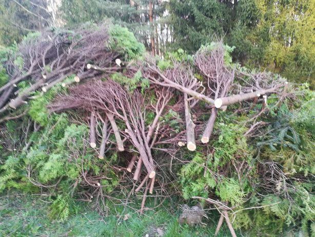 drewno dość grube
