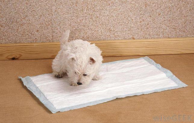 Resguardos para cachorros, fraldas para cão
