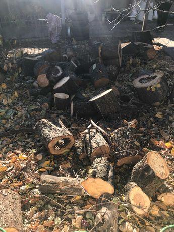 дрова бесплатно с ветками