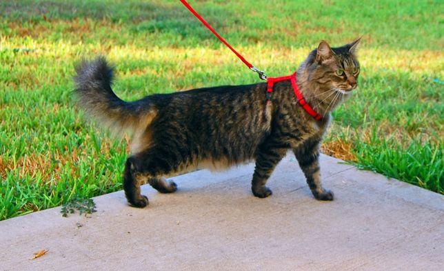 Поводок для котов или маленькой собачки
