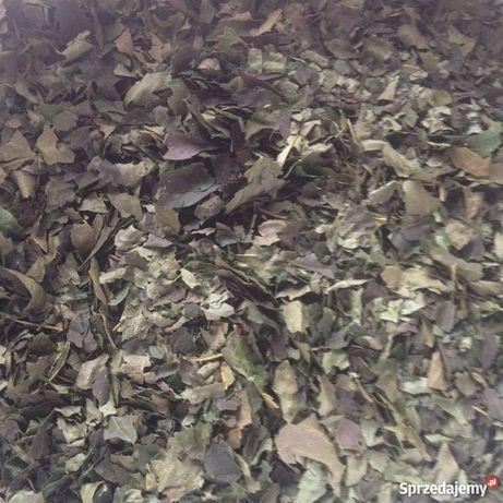 Suszone liście wiśni
