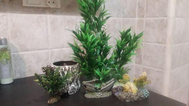 Akwarium dekoracje roślinki