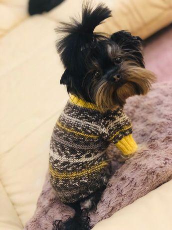 Новый свитер на йорика,кофта на собаку,собачку,ручная робота