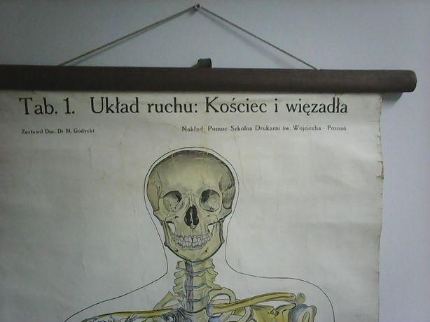 Stara plansza , Układ ruchu , kościec i wiązadła