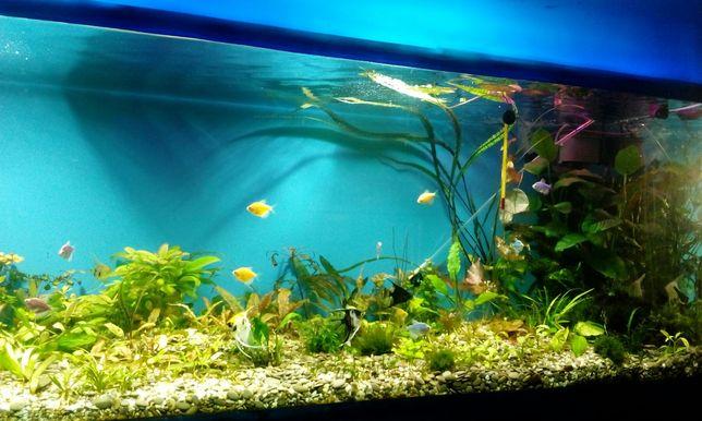 Обслуживание аквариумов, прудов