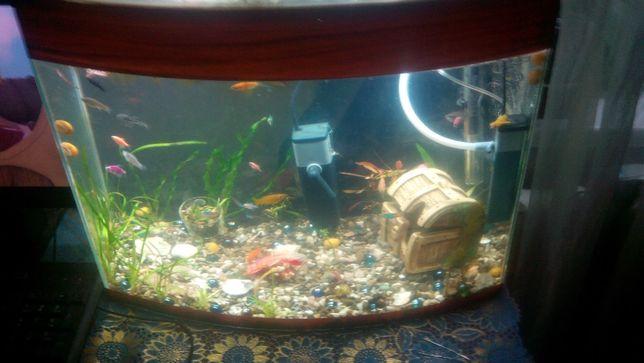 Продам аквариуми и рибок