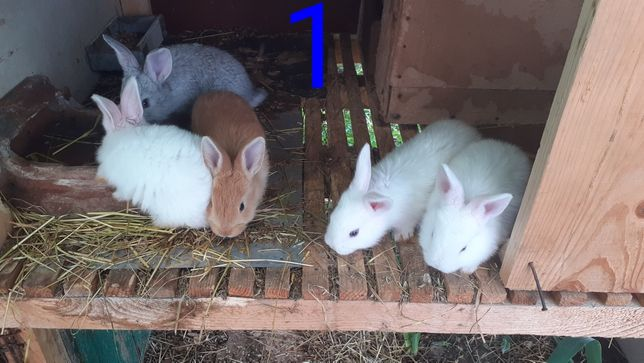 ПРодам Кролики Молодняк.