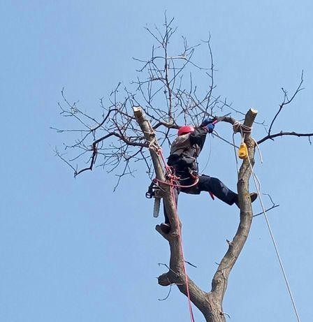Спил деревьев различной сложности. Обрезка  деревьев.