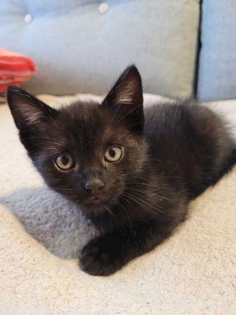 Slodki, mały czarny kot!