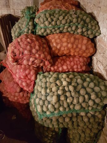 Ziemniaki wielkości Sadzeniaka Denar,Owacja Bellaroza Tajfun Dżelli
