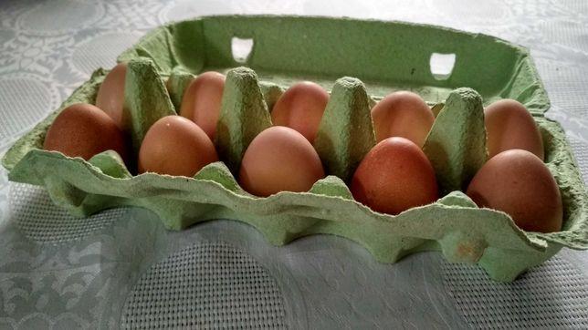 Jajka perlicze (perliczki, pantarki)