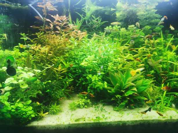Rośliny z przycinki wielka paka ponad 70 roślin wszystkie plany