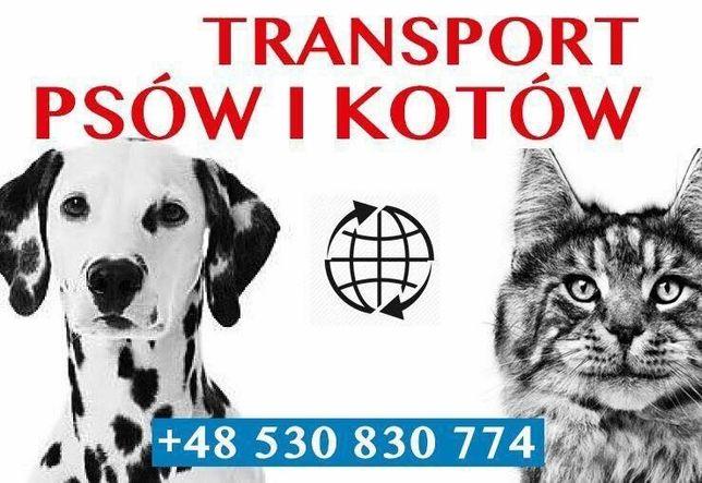 Transport Psa Kota Zwierząt Przewóz Psów Kotów szczeniak UK kurier EU