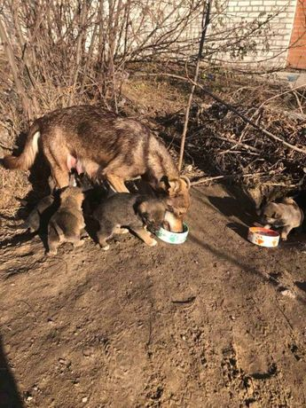 9 щенков живут в песочной яме, им необходима помощь