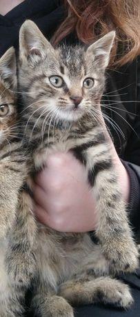 Oddam ostatnią z 4 kotkę ,maluszek czeka na swojego człowieka
