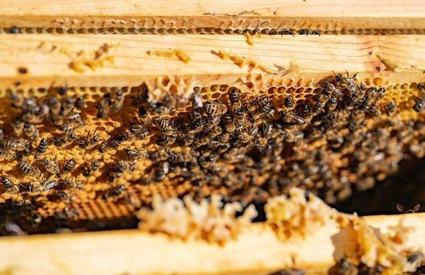 Продаю пчелесемьи