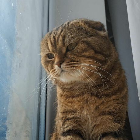 Опытный кот ждёт кошку на вязу