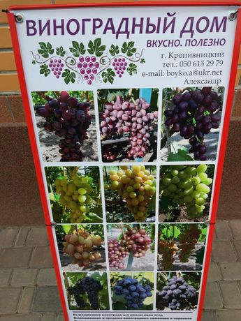 Саженцы винограда продаем