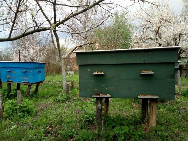 улики для пчёл лежаки