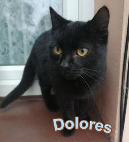 Czarna piękność Dolores