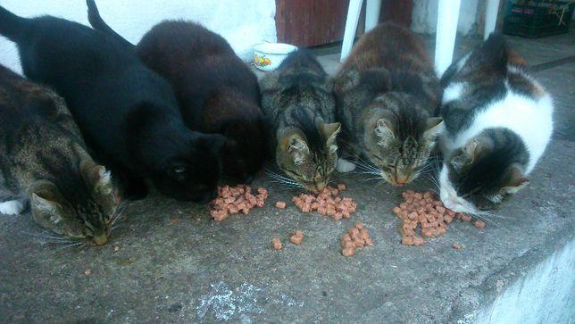 Karma dla kotów bezdomniaczków