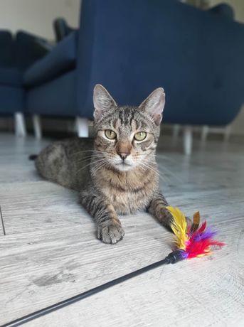 TURYN - Najfajniejszy kot na ziemi szuka kochającego domu!