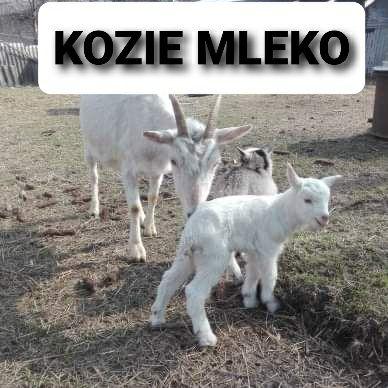 Kozie mleko sprzedam
