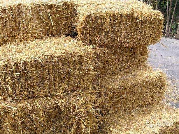 Тюки солома, сіно, (сено), пшенична, вівсяна, ячмінна солома в тюках.