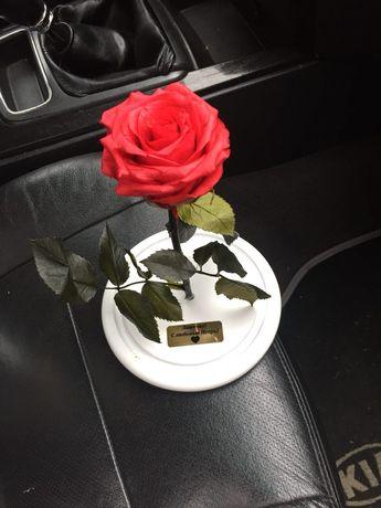 Роза в стеклянной Колбе +(Гравировка,Коробка,Лепестки).Тренд 2020 года