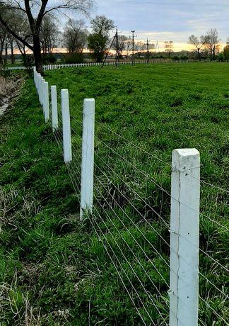 Ogrodzenia bydła krów kóz płoty leśna farm ASF dziki psy łąki pola las