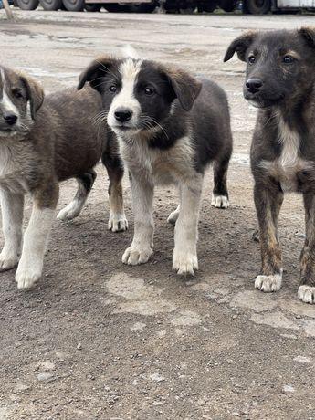 Чудові собаченята шукають дім