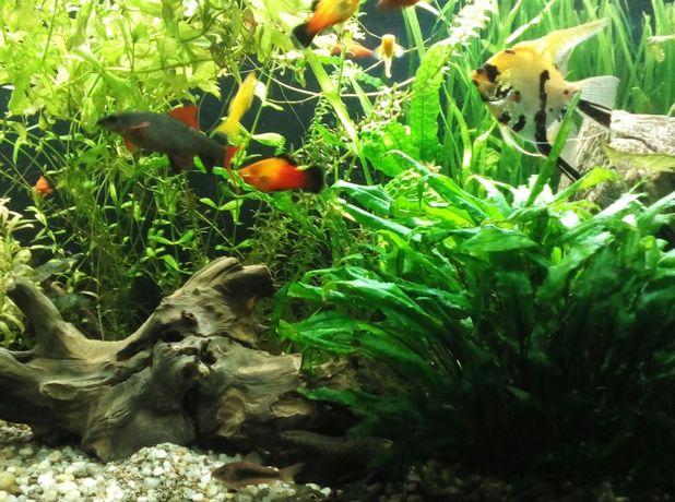 roślinki z przycinki