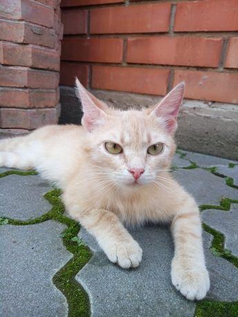 Отдам/продам 2/одну кошку(и)