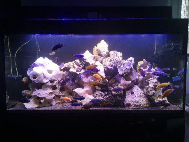Akwarium z pyszczkami malawi