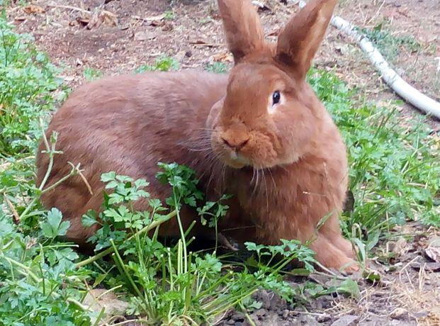 нзк кролики и другие