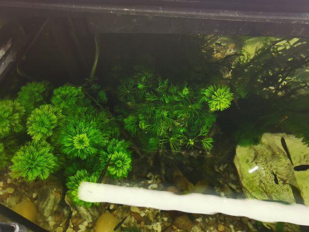Akwarium panoramiczne 72l