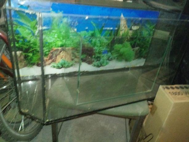 Akwarium na myszy