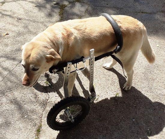 Cadeira de Rodas para Animais ANDARILHO / Cão & Gato ...