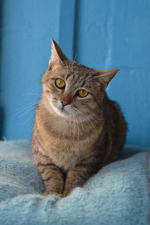 котичко плюшечка 1р в полосатій шубці