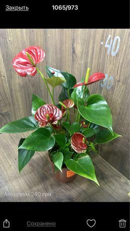 Комнатные растения, орхидеи