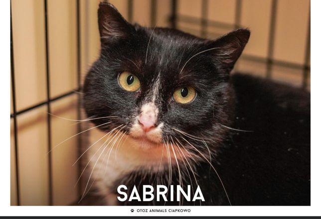 Znaleziona czarno-biała kotka-Sabrina gotowa do adopcji