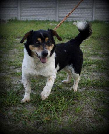 Tadzik - miły psiak szuka nowego domu